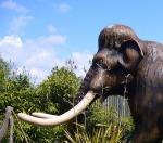 L'ivoire, ou la préhistoire au bout de votre mangue.